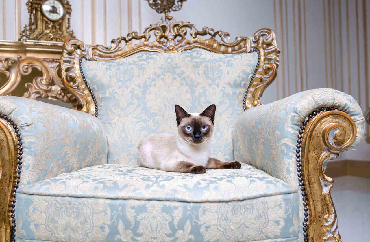 Decoration With Barocco Style Furniture: Baroque & Rococo